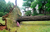 5-year-old Linnian Borden tries to push the tree back into the ground. Lillian and her mother Amanda Coleman came to look at the downed tree where they have been having picnics under it for the past five years since Lillian was born.