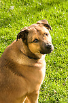 Mixed breed dog in morning light.