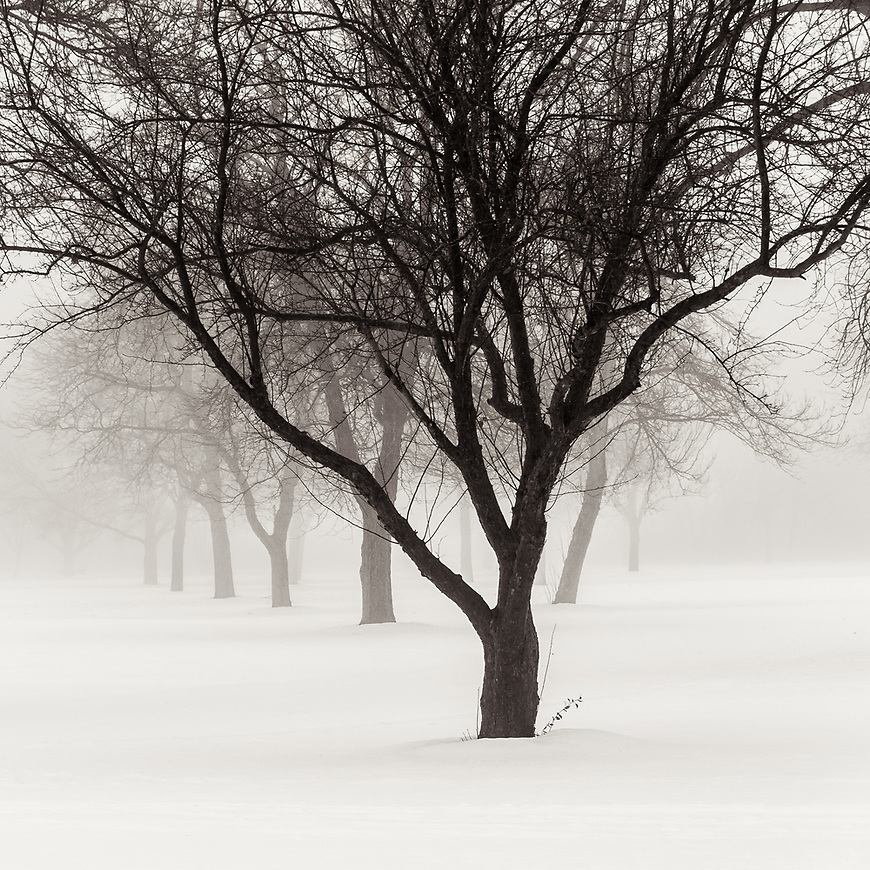 #blackandwhite #monochrome #wisconsin #midwestmemoir #photograph #tree #fog #snow #winter #landscape