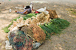 Indigenous farmer takes a break after a long day of harvesting green onions, Santiago Atitlan, Lake Atitlan, Guatemala
