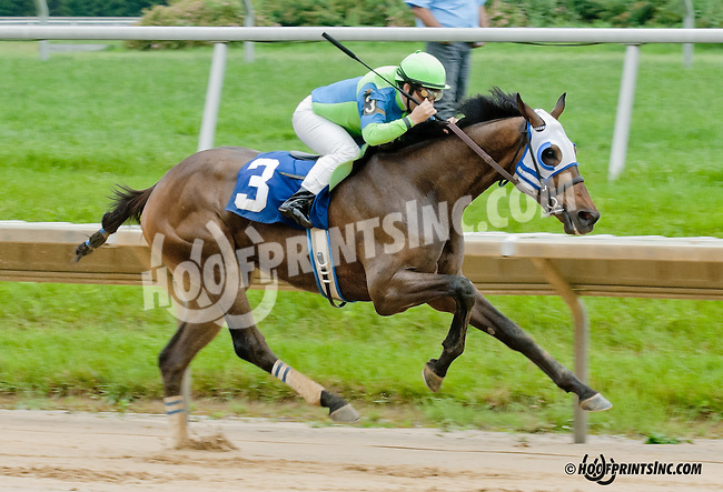 Shanghai Daddy winning at Delaware Park on 6/13/13