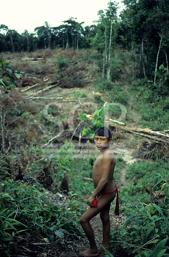 Roraima, Brazil. Yanomami teenage boy in the village food garden.