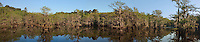 978000002 texas panoramic scenic of moss draped cypress trees in caddo lake in east texas