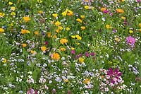 "Blumenwiese, Wildblumenwiese, Wildblumen-Wiese, Blumenmischung, Wildblumen, Blumenmischung ""Eschweger Blütenzauber"", Insektenschutz, wildflower meadow"