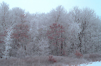 Snowy forest of mystery and mirth with hoar frost.  Freeway 94 Wisconsin USA