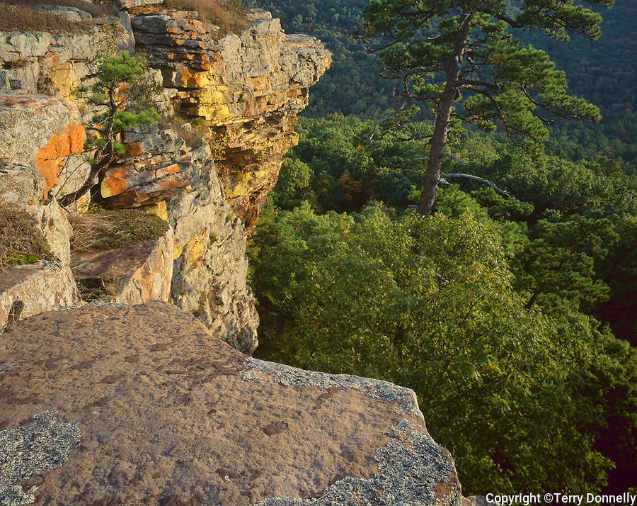 Petit Jean State Park, AR<br /> Late light on lichen covered sandstone cliff of Red Bluff above the forest of Cedar Creek Canyon