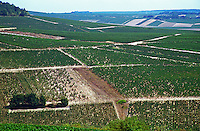 The view from the top of the Chablis grand cru hill - west over Montee de Tonnerre premier cru (first growth) needing replanting