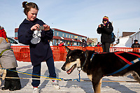 Young girl from Nome takes photos of Ross Adam's dogs in the finish chute in Nome during the 2010 Iditarod