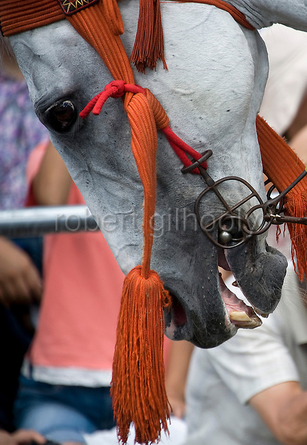 A horse takes part in the annual Reitaisai Grand Festival at Tsurugaoka Hachimangu Shrine in Kamakura, Japan on  14 Sept. 2012.  Sept 14 marks the first day of the 3-day Reitaisai festival, which starts early in the morning when shrine priests and officials perform a purification ritual in the ocean during a rite known as hamaorisai and limaxes with a display of yabusame horseback archery. Photographer: Robert Gilhooly