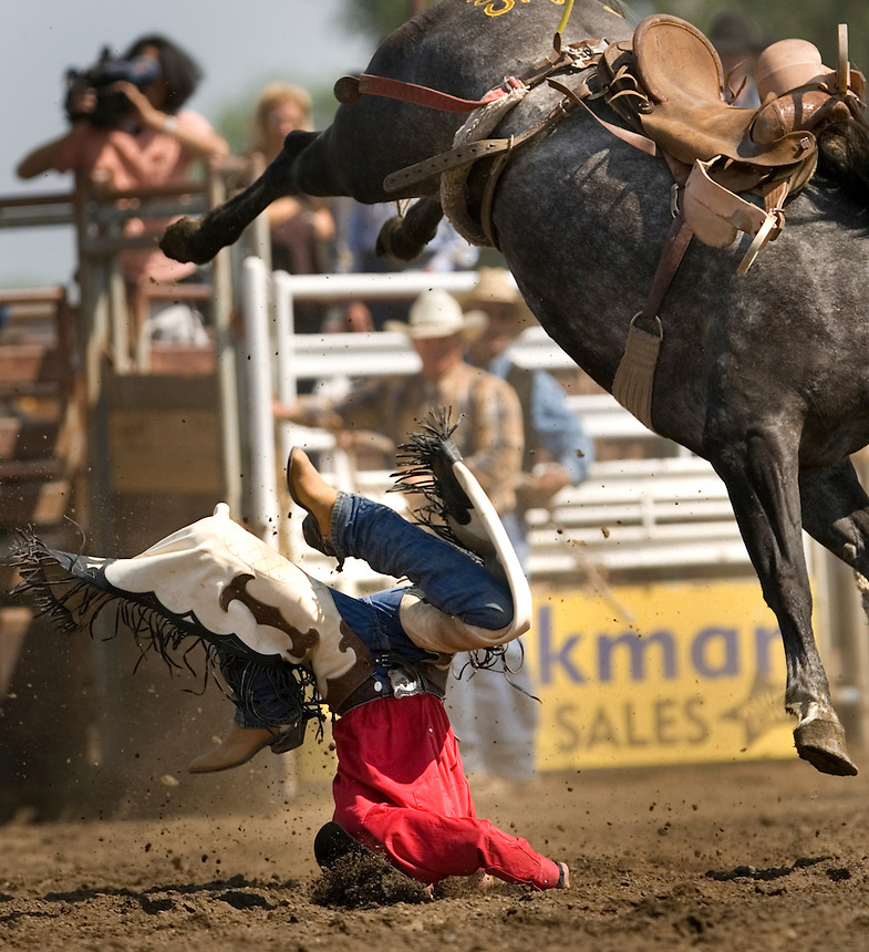 A cowboy his the arena gournd while bucking a saddle bronc during the Miles City Bucking Horse Sale at the Eastern Montana Fairgrounds in Miles City Montana Sat., May 19, 2007. Saddle broncs and bareback broncs are auctioned off after they are bucked.