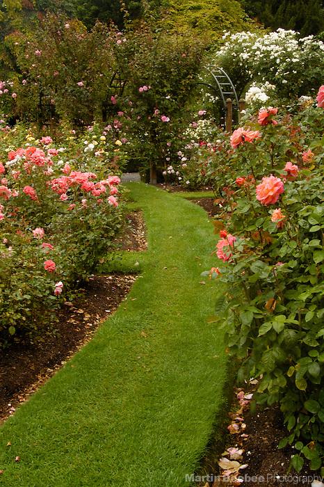 Walking path through rose garden in the Christchurch Botanic Garden, Christchurch, New Zealand