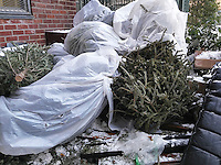 Discarded Christmas trees await pick up by the Dept. of Sanitation in the trash collection in New York on Monday, January 9, 2017. New York provides curbside pick up of discarded Christmas trees, provided tinsel, stands and other decorations are removed, until January 14, 2017.  (© Richard B. Levine)