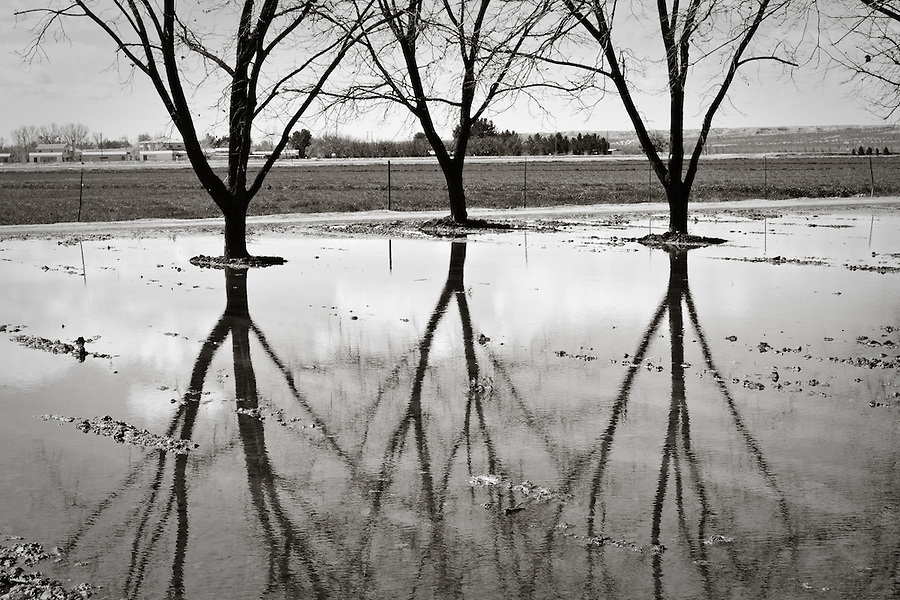 Flooded pecan orchard near La Union, New Mexico.