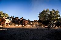 Chivos y Borregos<br /> Rancho eco tur&iacute;stico El Pe&ntilde;asco en el pueblo Magdalena de Kino. Magdalena Sonora. <br /> &copy;Foto: LuisGutierrrez/NortePhoto