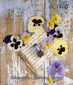 Interlitho-Alberto, FLOWERS, BLUMEN, FLORES, photos+++++,blossoms, wood,KL16501,#f#, EVERYDAY