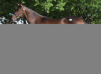 Hip #40 Empire Maker - Ticker Tape filly at the  Keeneland September Yearling Sale.  September 9, 2012.