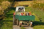 Apetlon, Nationalpark Neusiedlersee, Seewinkel, Bezirk Neusiedl am See, Burgenland, Austria, Österreich.