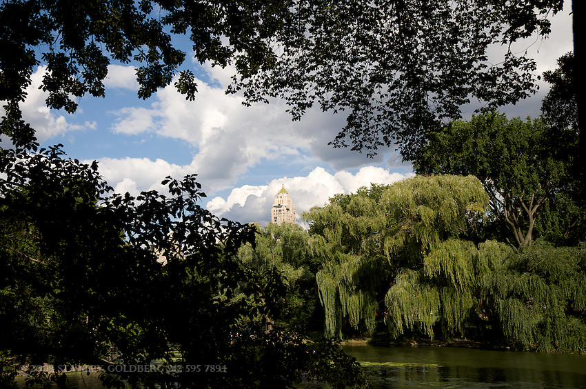 Willow Tree by the Central Park Boat Basin