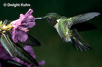 Hummingbirds - Life Cycle