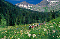 Llama packing,  Oh-Be-Joyful Trail<br /> Ruby Range<br /> Gunnison National Forest<br /> Rocky Mountains,  Colorado