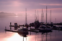 Commercial Fishing Boats docked in Marina in Ganges Harbour at Sunrise, Saltspring (Salt Spring) Island, Southern Gulf Islands, BC, British Columbia, Canada