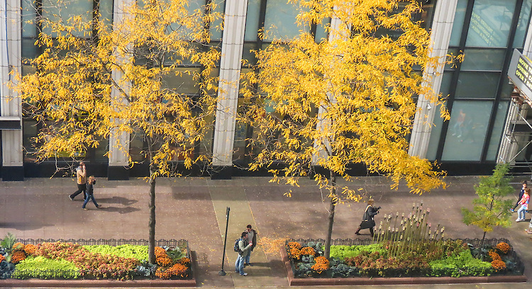 Overlooking Chicago's State Street on a fall morning. (DePaul University/Jamie Moncrief)