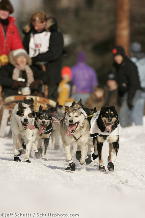 March 3, 2007.  Anchorage, Alaska.   Sonny Lindner's dogs during the ceremonial start day of the Iditarod Trail Sled Dog Race