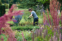 Female gardener pruning, Middle Claydon, near Buckingham, Buckinghamshire