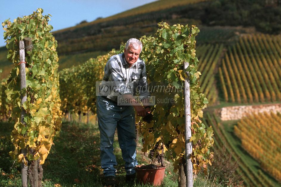 Europe/France/Alsace/68/Haut-Rhin/Turkheim: Mr Zind Humbrecht vendange le cépage pinot gris [Non destiné à un usage publicitaire - Not intended for an advertising use]