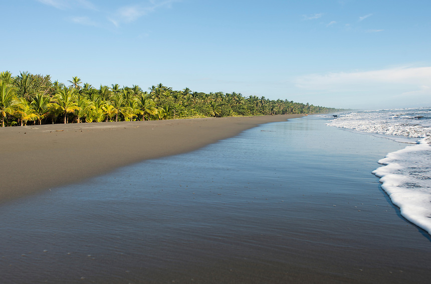 The beach of Moin where poachers and  conservationist fight for turtle eggs is also the beach where conservationist Jairo Mora was recently murdered.  Costa Rica Wildlife Sanctuary run by Vanessa Lizano and her family. Moin, Limon, Costa Rica.