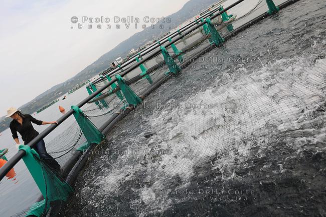 Slovenia -Nel Golfo di Pirano Irena Fonda da alcuni anni alleva i branzini puntando alla massima qualità. E i suoi, sono apprezzati quanto quelli pescati in mare aperto. NELLA FOTO: le vasche di allevamento: Irena Fonda da il mangime ai pesci.