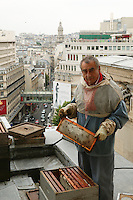 Jean Poucton <br /> and his hives <br /> on the roof of the opera, <br /> with the Galeries Lafayette <br /> in the background.