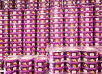 Piles of Quality Street chocolate tins piled up in a supermarket, UK
