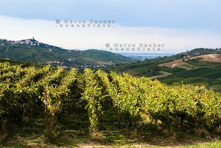 Vitigno presso Lirio (Pavia), nell'Oltrepò Pavese del nord. A sx sullo sfondo: il castello di Cigognola --- Vineyard near Lirio (Pavia), in the northern Oltrepò Pavese. Left on the background: the castle of Cigognola