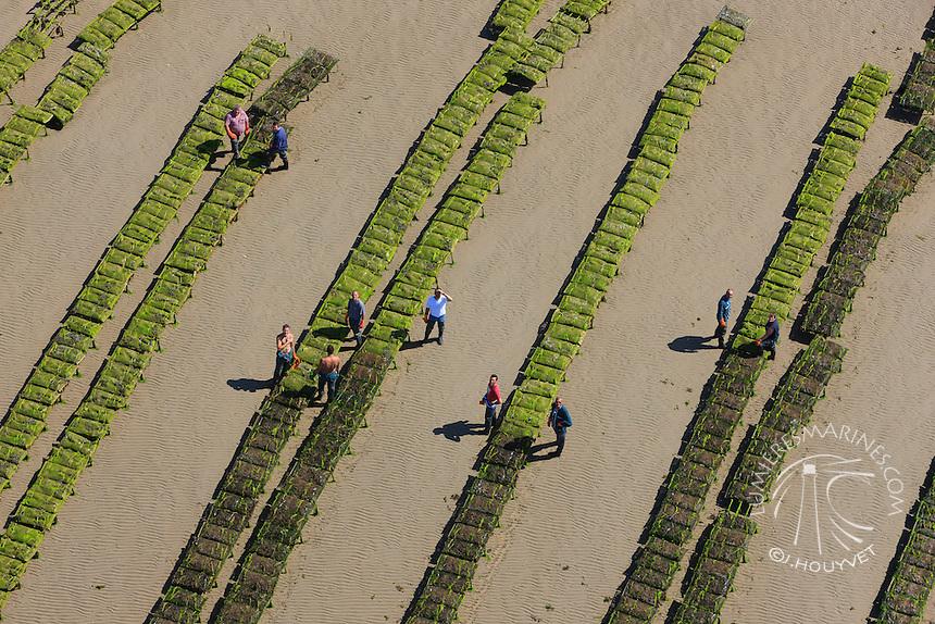 France, Normandie, Manche (50), Baie des Veys, conchlyliculture, ostréiculuture, parc à huitres (vue aérienne) // France, Normandy, Manche, Veys bay, oysters (aerial view)