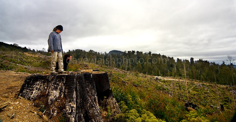 "Near the Florentine Forest in Tasmania, forest activists Wendy and Nish survey a two year old clearcut. Mount Wedge is peeping up from the forests. Forestry Tasmania and contracted companies cut these forests for wood pulp, then burn the leftovers, drops 1080 poison to kill the wildlife. Plantation forest or ""native forest is then grown its place. Activists in Tasmania maintain that the government's forestry policy is destroying the environment and that 90% of Tasmania's old growth forest is already gone."