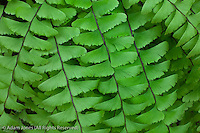 Fern pattern, Great Smoky Mountains National Park, Tennessee