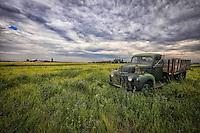 Feline Flatbed Ford - Montana
