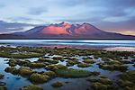 Bolivia, Altiplano, Laguna Canapa at sunset