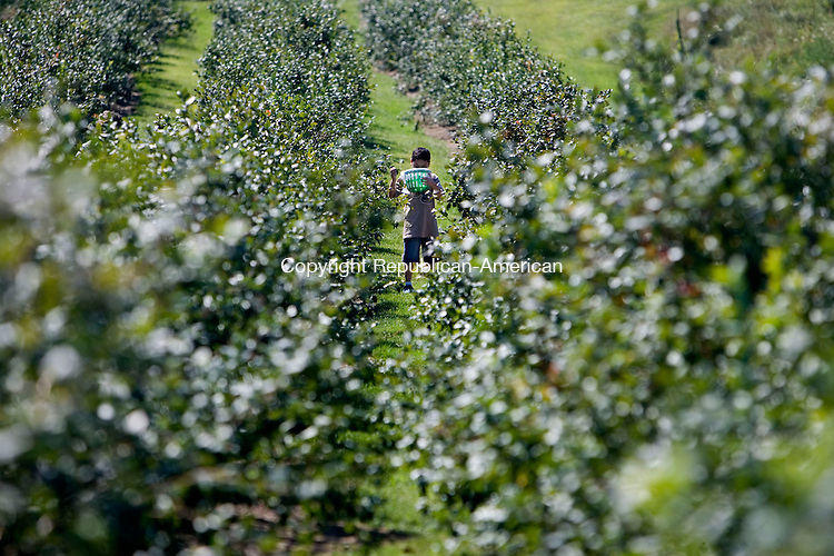BETHLEHEM, CT - 01 SEPTEMBER 2008 -090108JT09--<br /> Johnathan Liguz, 7, of Naugatuck, looks in his bucket as he picks blueberries at March Farm on Labor Day, Sept. 1, 2008.<br /> Josalee Thrift Republican-American