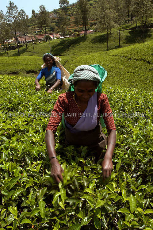 5/16/2003--Nuwara Elliya, Sri Lanka..Tea pickers in the mountains of central Sri Lanka...All photographs ©2003 Stuart Isett.All rights reserved.This image may not be reproduced with