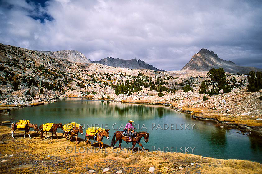 Cowgirl leading pack mules in the high Sierra wilderness, California