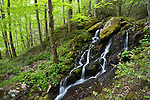 Great Smoky Mountains National Park, TN/NC<br /> Small forest waterfall flowing over mossy boulders above the Middle Prong Little River in Spring