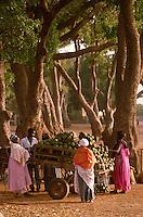 Little Borassus aethiopum fruis market  beneath  Kaya senegalensis trees