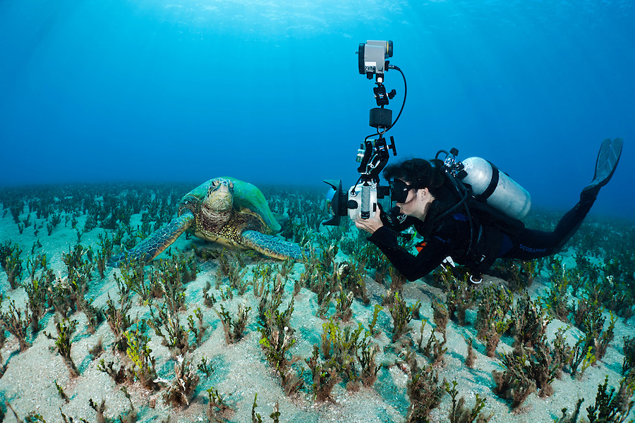 A photographer (MR) lines up on a green sea turtle, Chelonia mydas, off the island of Maui, Hawaii.