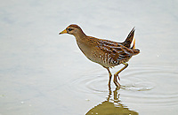 Reifel Migratory Bird Sanctuary, British Columbia, Canada<br /> 9/27/2014