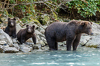 Fall landscape of grizzly bear sow and spring cubs at Crescent Lake in Lake Clark National Park, Alaska<br /> <br /> Photo by Jeff Schultz/SchultzPhoto.com  (C) 2018  ALL RIGHTS RESERVED<br /> <br /> 2018 Bears, Glaciers and Fall Colors Photo tour/workshop