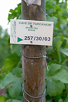 sign cave de t  brand gc turckheim alsace france