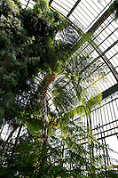 Plant History Glasshouse (formerly Australian Glasshouse), 1830s, Rohault de Fleury, Jardin des Plantes, Museum National d'Histoire Naturelle, Paris, France. Low angle view of cyatheales with the foliage of a Podocarpus Elongata (left) against the glass and metal structure.