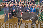 Pictured with thje Champion Female at the fat stock show and sale held at the Mid Kerry co-op mart, MKilltown on Saturday were James Daly, Donal Counihan, Mike McCarthy, Larkins Bar, sponsors, Eamon Kissane, Beaufort, seller, Kenneth Grant, Tadgh O'Connor, Gneeveguilla, buyer, Mike Randles and Denis Sheehan.....NO FEE...PR SHOT